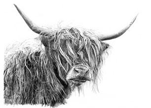 Highland-Cow-MoD-sml