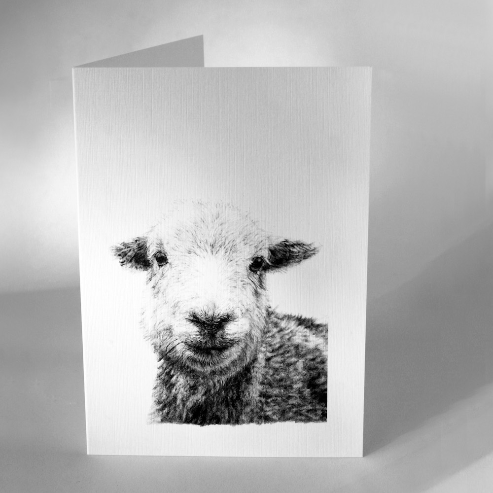 Herdwick Greetings Cards