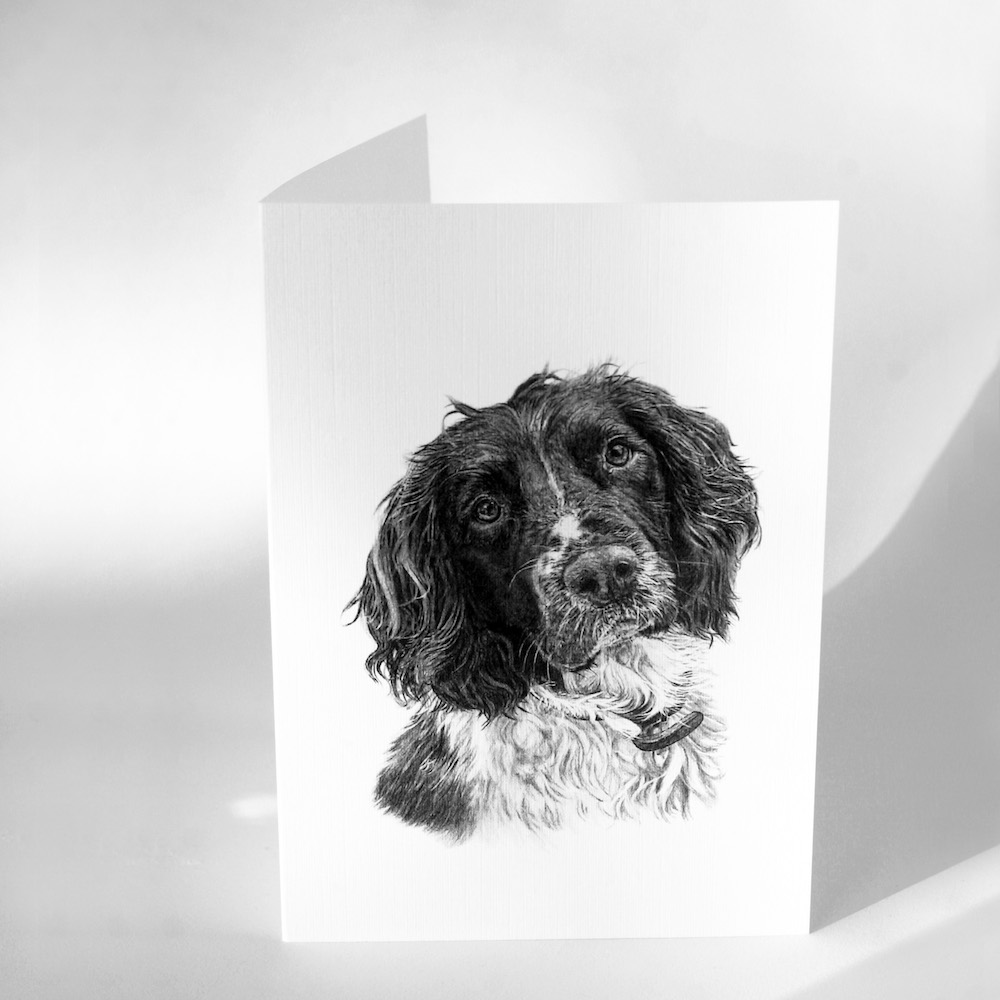 Springer Spaniel Greetings Cards