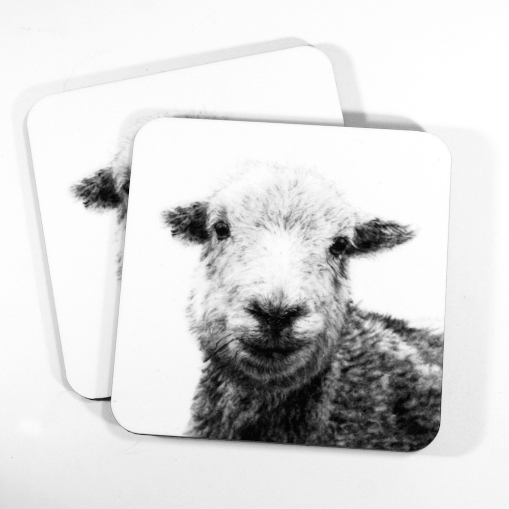 Herdwick Coasters